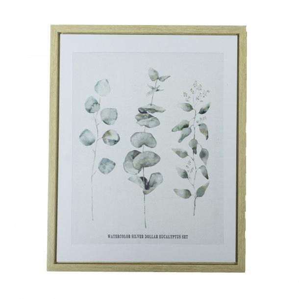 Plakat med ramme SET silver dollar Eucalyptus 40x50   Speedtsberg